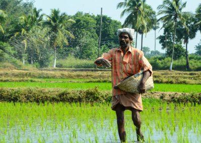 Conduct Baseline Surveys for 6 projects – Smallholder Agribusiness Partnerships Programme (SAPP)